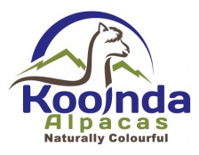 Kooinda_Alpacas_Final_72.jpg